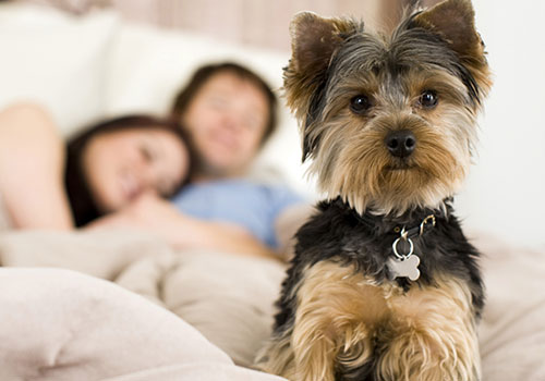 Is your home pet-friendly?