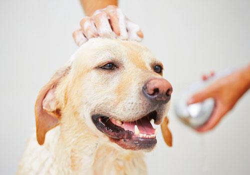 How Often Should You Bathe a Dog