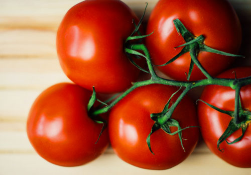 Are Tomatoes Good for Dogs?