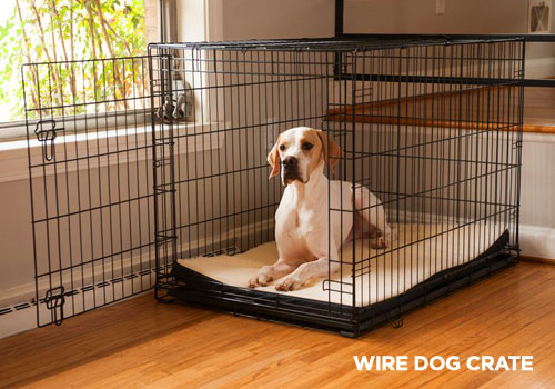 Best Dog Crates for Cars
