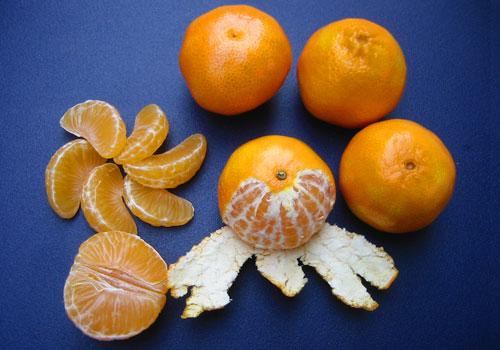 Can yorkies eat oranges