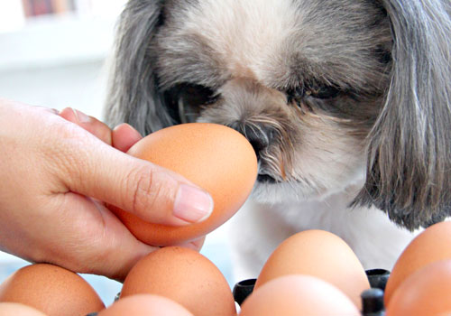 Are Raw Eggs Good for Dogs
