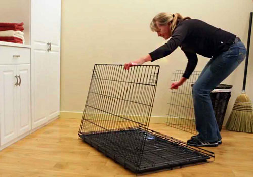 Crate Training a Dog