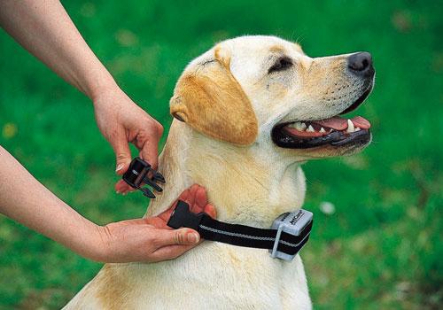 Bark Shock Collar