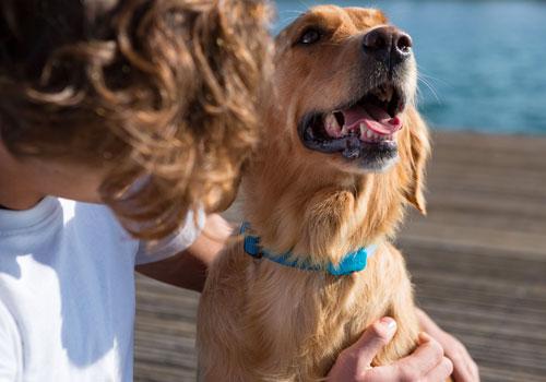 Best Bark Collar