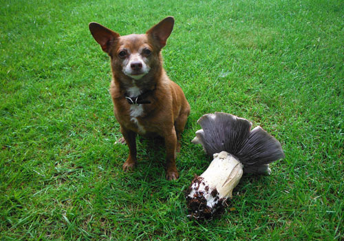 Dogs and Mushrooms
