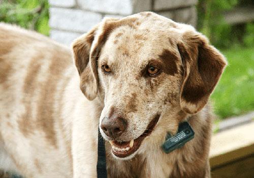Dog Shock Collar Reviews