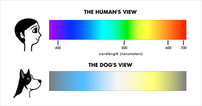 What Colors Do Dogs See