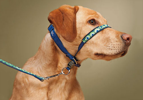 Best Harness for Puppies