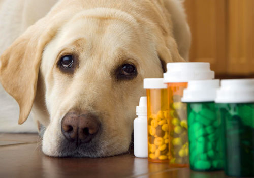 Giving Dogs Benadryl