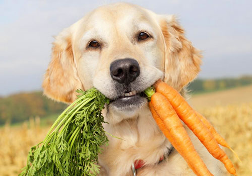 Are Carrots Bad for Dogs