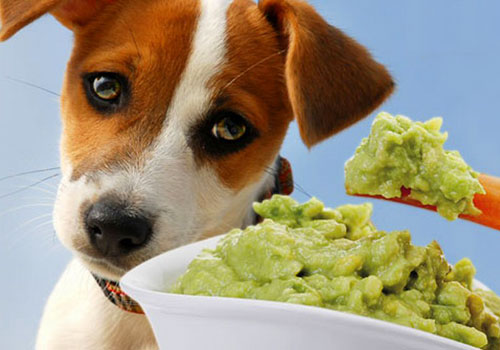 Is Avocado Good for Dogs