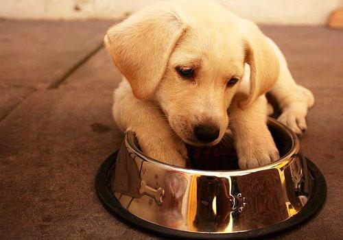 Best Puppy Food Brand