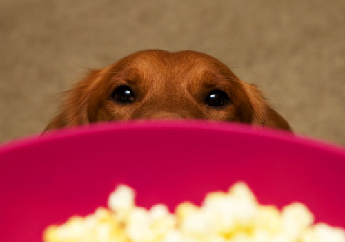 Can Dogs Have Popcorn