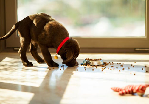Top Puppy Food