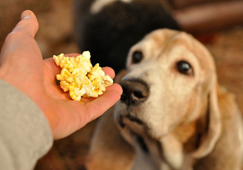 Popcorn Bad for Dogs