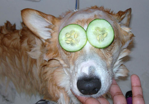 Dogs and Cucumber