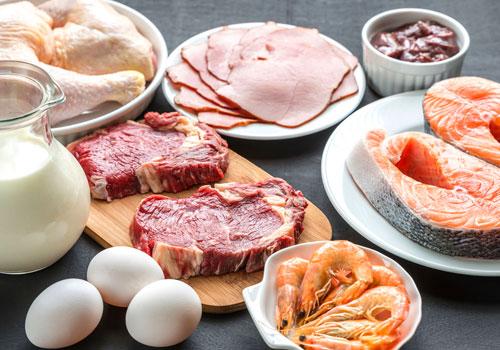 Protein Rich Pug Food