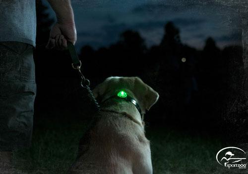 Sport DOG collar