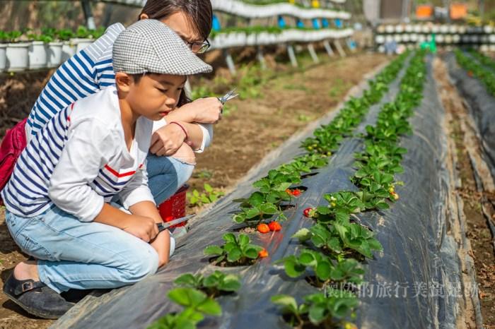 【台南親子】手牽手一起採草莓去!在台南市區的草莓田:台南開心有機農場