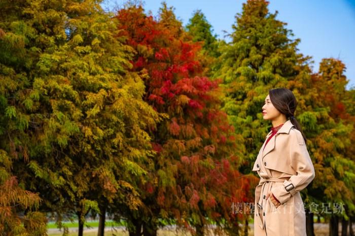 【六甲景點】台南六甲落羽松秘境,這個位置拍照最漂亮,收藏菁埔的美