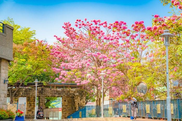【台南美景】粉紅風鈴木盛開!竹溪畔的浪漫粉紅衣裳