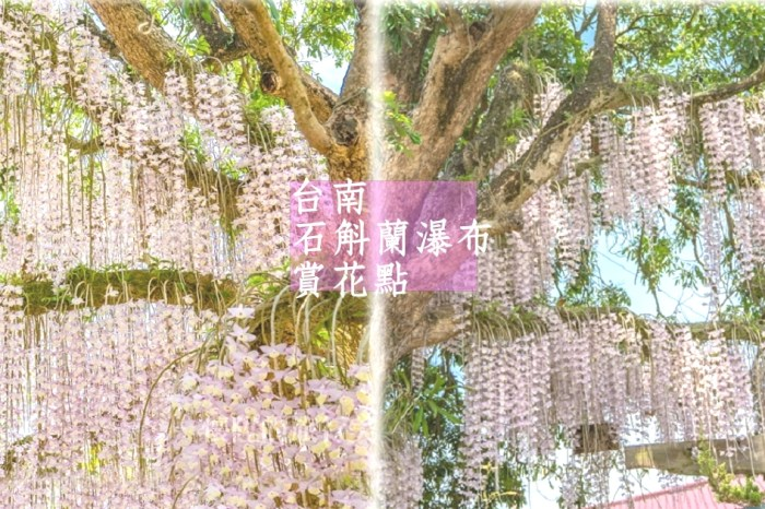 台南秘境|白河石斛蘭瀑布,小村莊裡的浪漫粉紅花海,充滿驚喜的鄉間小路