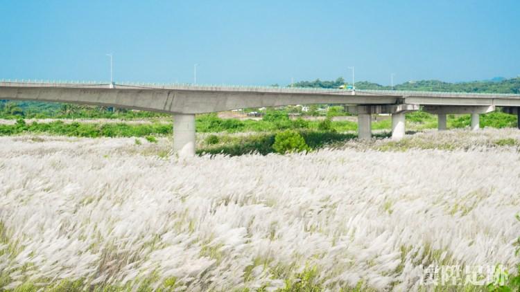 秋天來了!台南景點下起九月雪,橋下一片浪漫雪白大地|台南賞花趣 大內景點甜根子