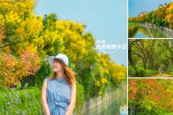 【台南景點】秋季限定絕美欒樹龍貓步道,黃綠紅交替的山海圳美景