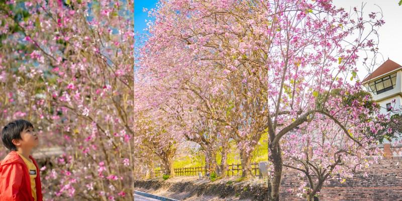 台南賞花 台南賞櫻小旅行!三個美麗的浪漫粉紅台南賞花點,城堡裡盛開的粉色南洋櫻