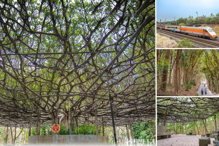 台南景點 川文山森林生態保育農場,寧靜舒適的台南森林步道,尋找藏在森林中的賞火車秘境