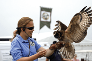 Chatsworth Country Fair - Charlotte Hill & Birds of Prey