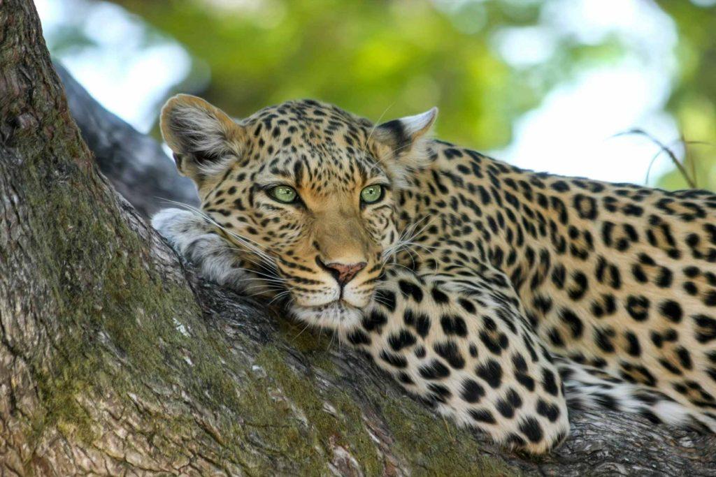 Pearl King Travel - Safari Holidays