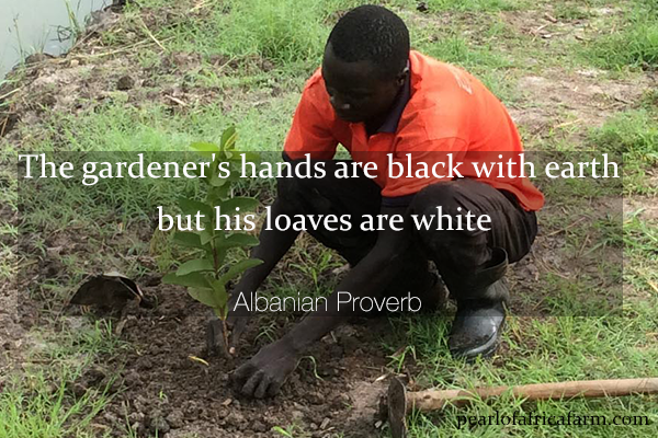 The-gardener's-hands-are-black-with-earth-but-his-loaves-are-white