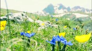 Wind noise in the mountain flower kingdom