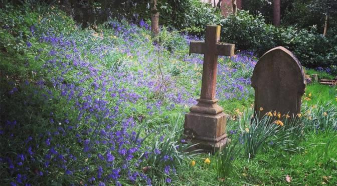 Churchyard Bluebells