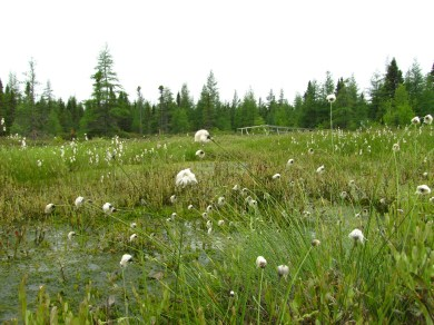 Rewetted peat production site in Québec, Canada. Photo: Susann Warnecke