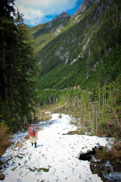 Hiking up an old avalanche path