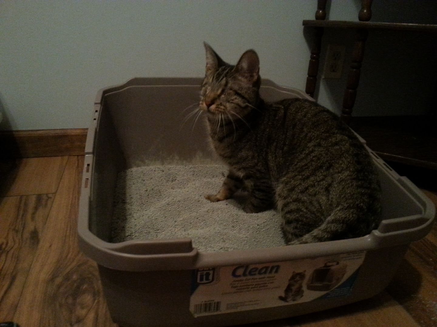 pebbles blind cat uses fresh potty every day