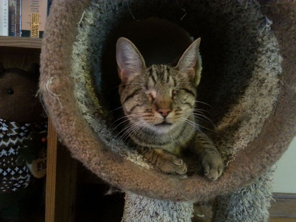 Pebbles the Blind Cat Cozy