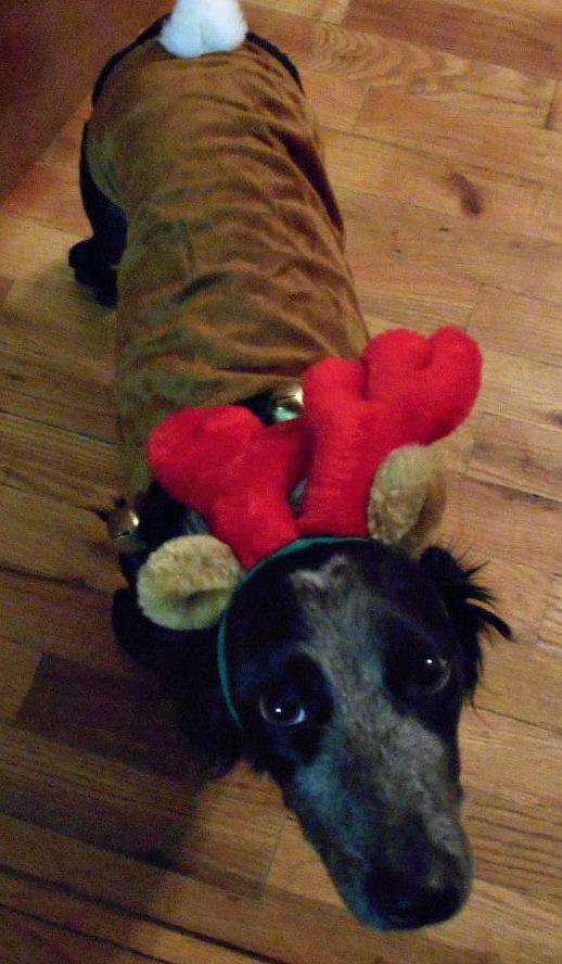 Linnie the Rain Dog of Santa Paws