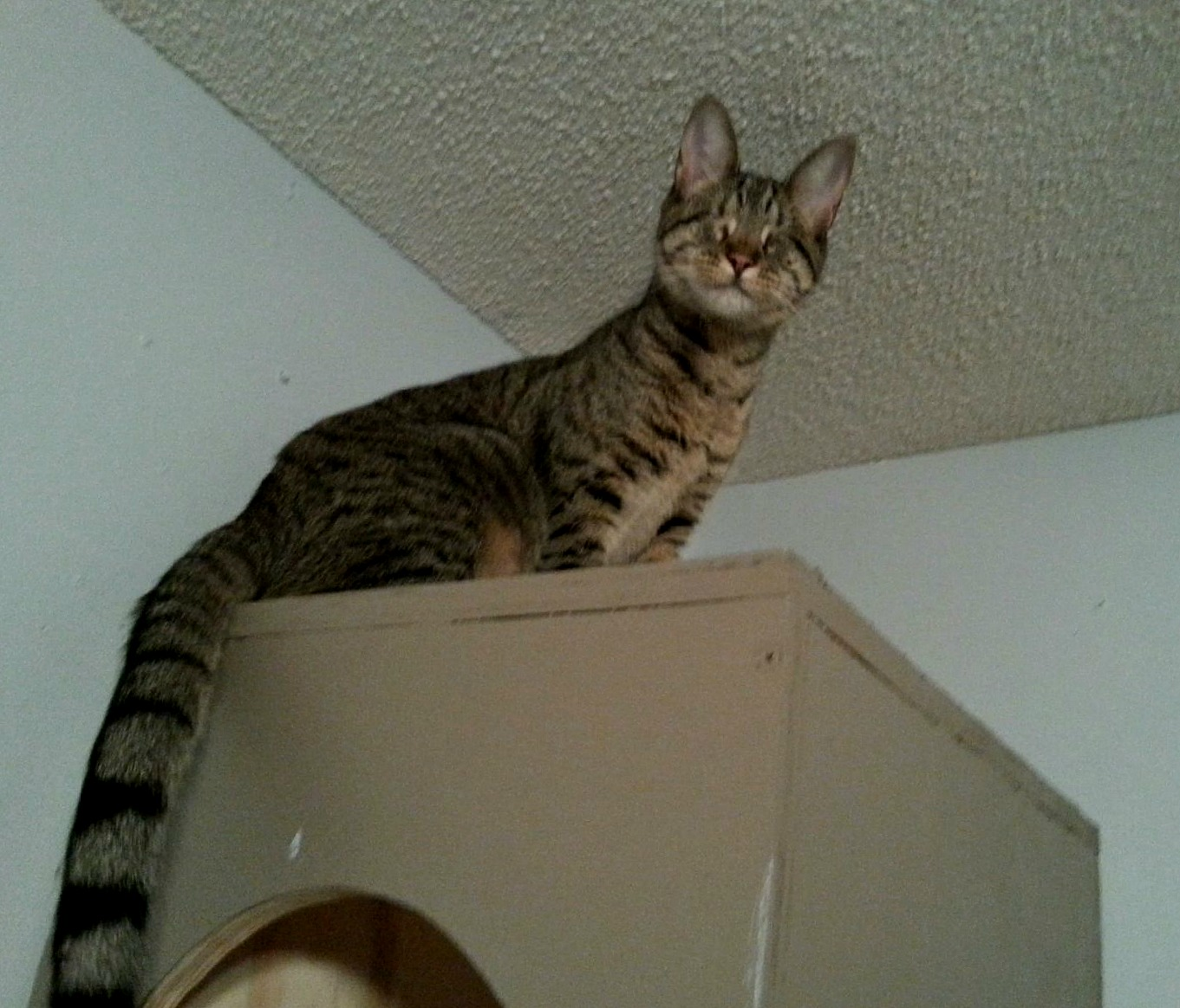 Pebbles the Blind Cat Up High
