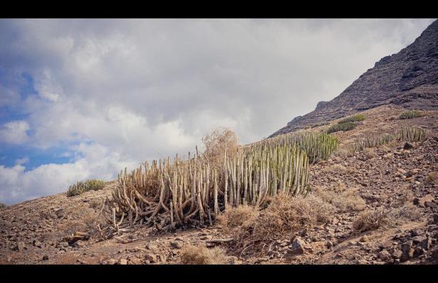 Natürliche Vegetation