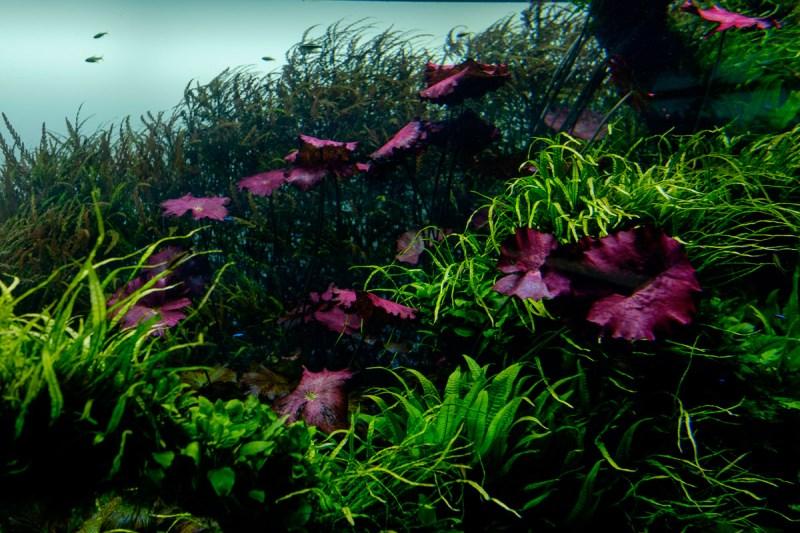 Forests Underwater