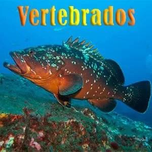 mero pecesmediterraneo