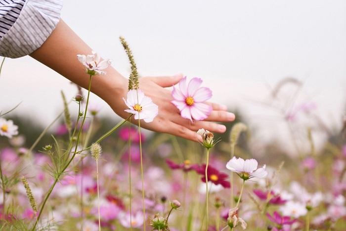 Gérer ses émotions naturellement avec les fleurs de Bach