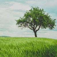Idees cadeaux immateriels-arbre