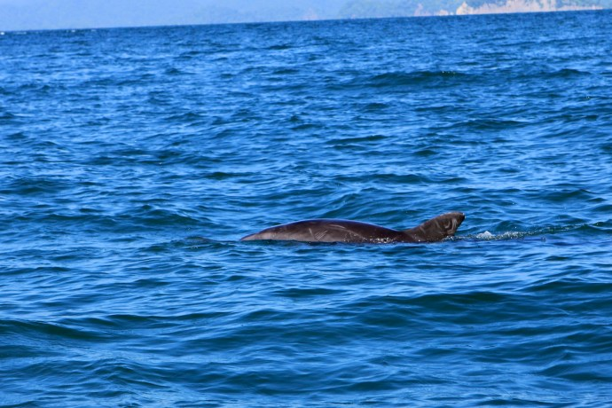Some dolphins came to check us out on the way over. Beautiful animals.