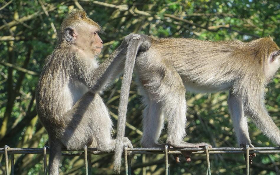 The Sacred Monkey Sanctuary