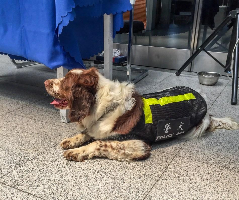 Police Dog at Train Station